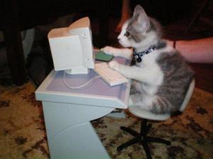 gato trabalhando